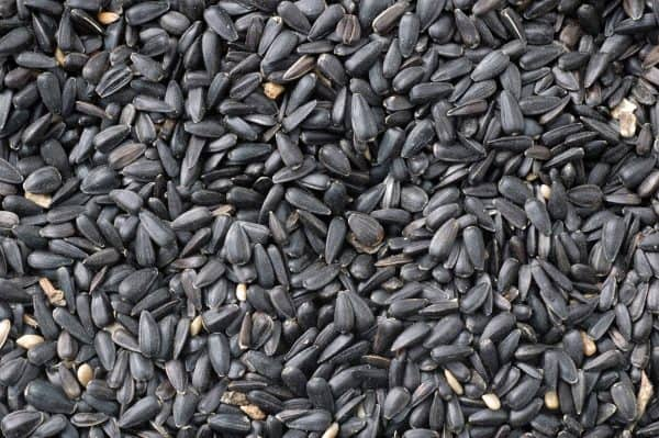 Black sunflower seed bird food