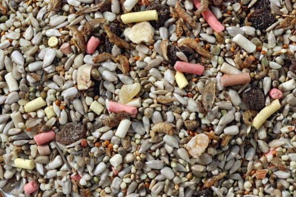 Insect mix bird food