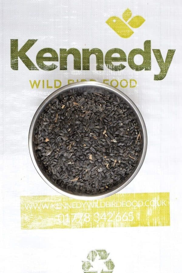 Sunflower black bird food