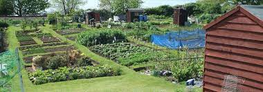 This image has an empty alt attribute; its file name is allotment.jpg