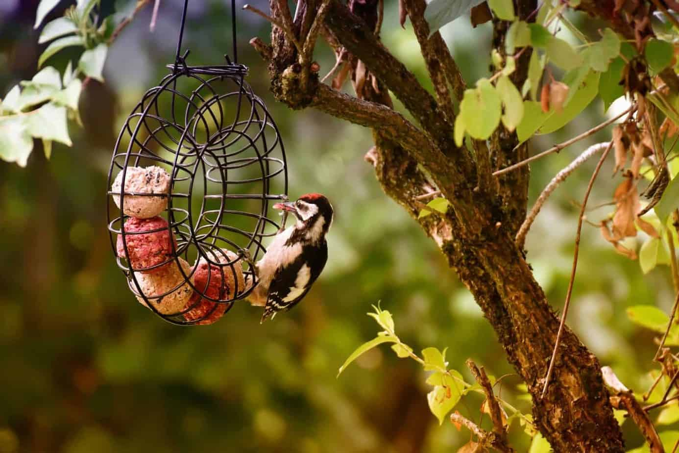 bird feeding mistakes and advice