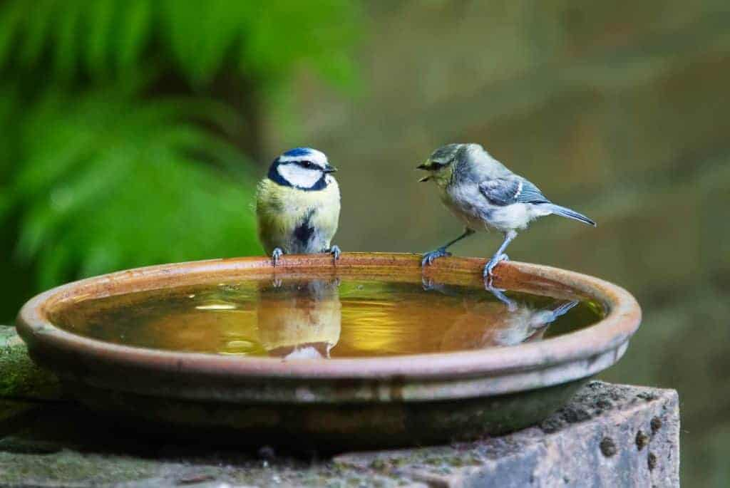 birds bathing in water