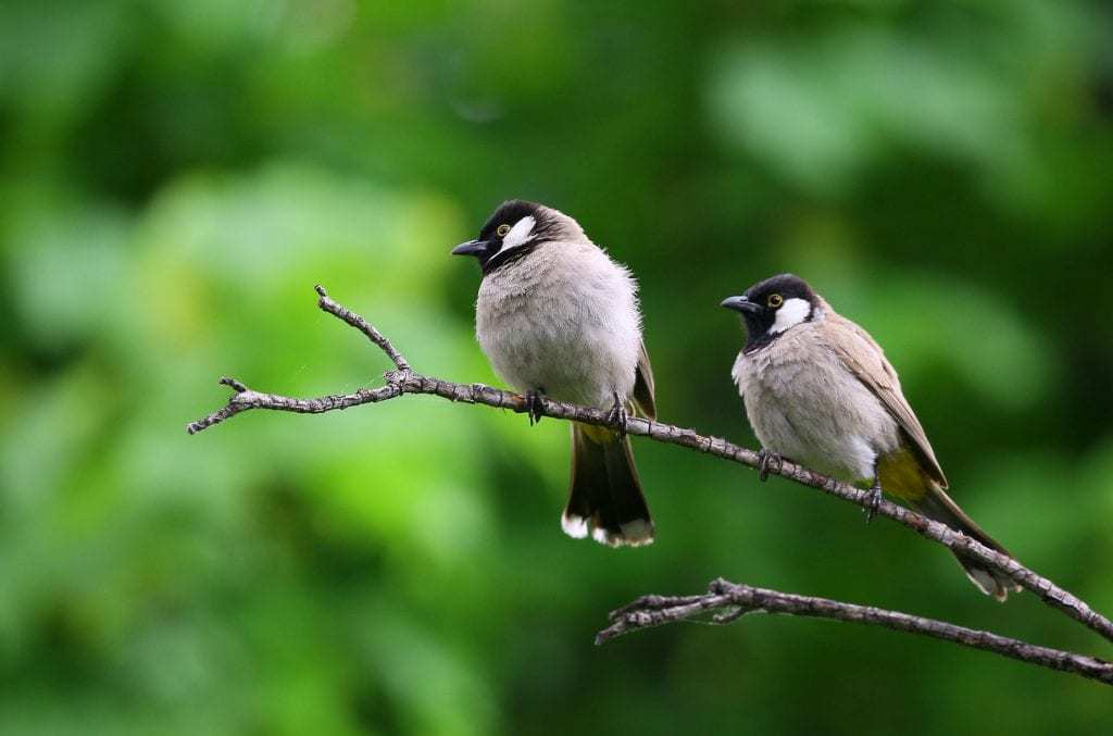 two birds on a branch for a blog by kennedy Wild Bird Food on why birds sing.