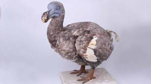 This image has an empty alt attribute; its file name is dodo-2.jpg