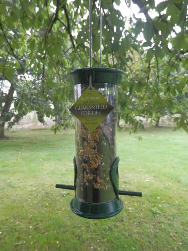 How to keep your bird feeder clean