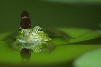 frog with buterfly on its head