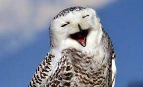 This image has an empty alt attribute; its file name is laughing-owl-1.jpg