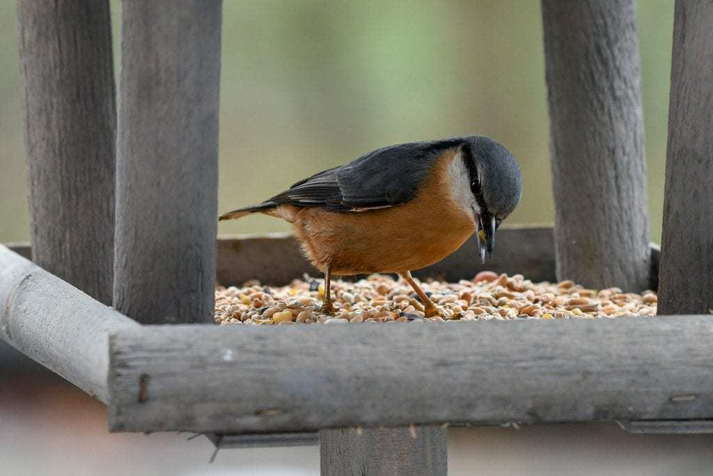What to feed your garden birds