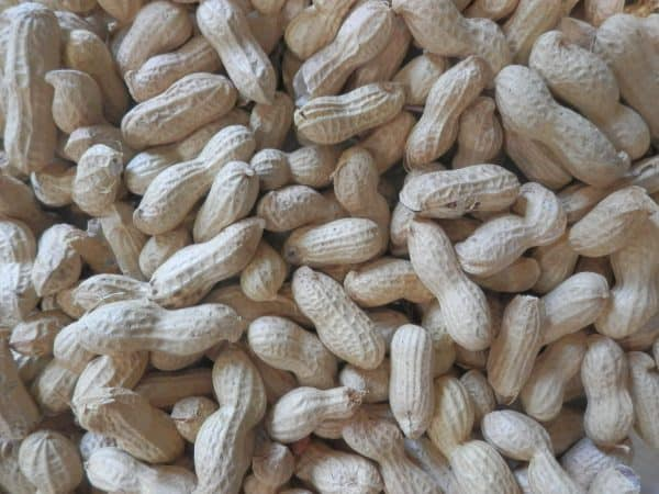 peanuts in shell for birds