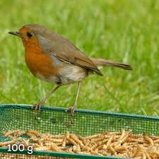 This image has an empty alt attribute; its file name is robin-1.jpg