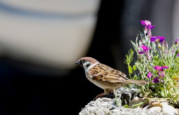 sparrow with flowers