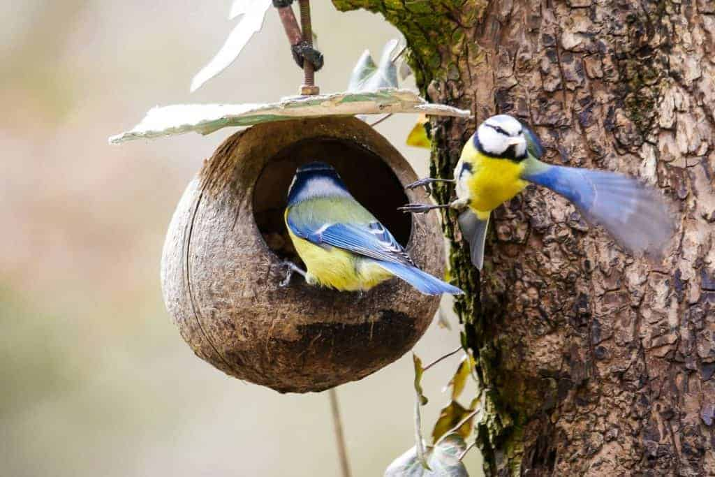 what can birds eat