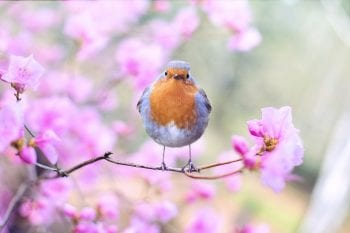 what to feed robin in spring